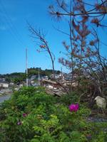katsurashima16.jpg